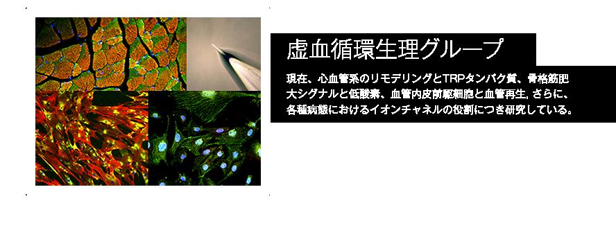 虚血循環生理グループ詳細へ