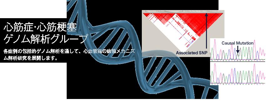 心筋症・心筋梗塞ゲノム解析グループ 詳細へ
